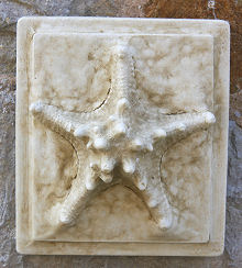 Starfish Wall Tile